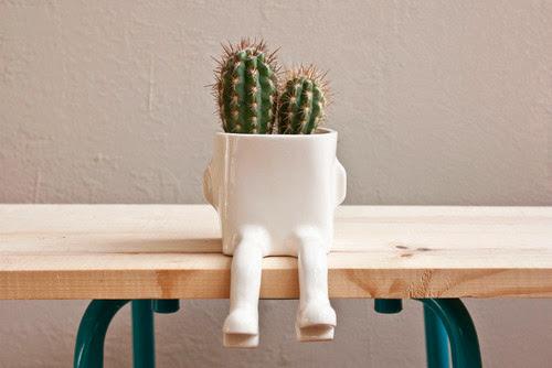 cactus feet.jpg