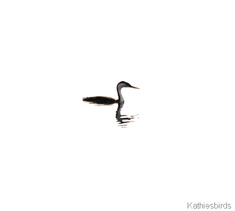 21. dream grebe-kab