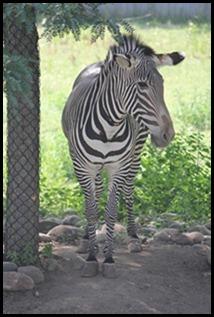 Zoo5 073