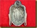 Topeng Budha - daleman
