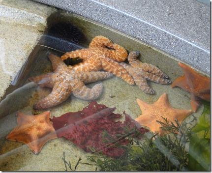 aquarium 144