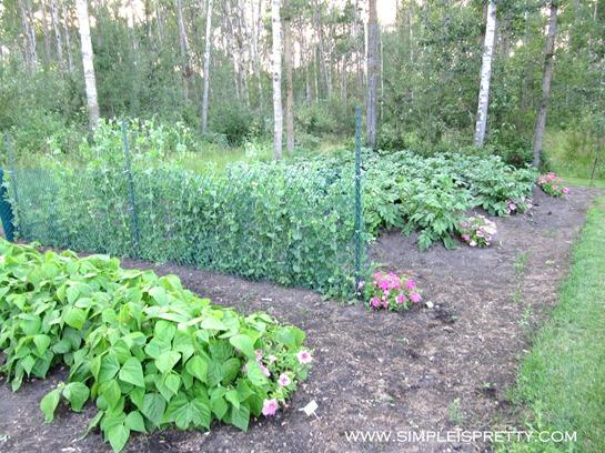 Garden 2012 www.simpleispretty.com