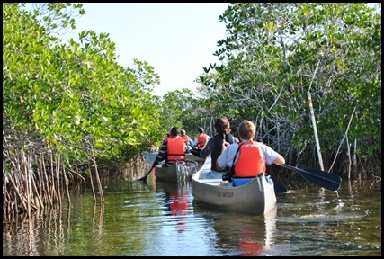 09e - Mangrove Paddling through