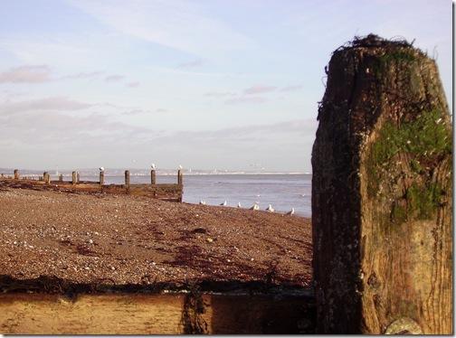 2012 jan beach 019
