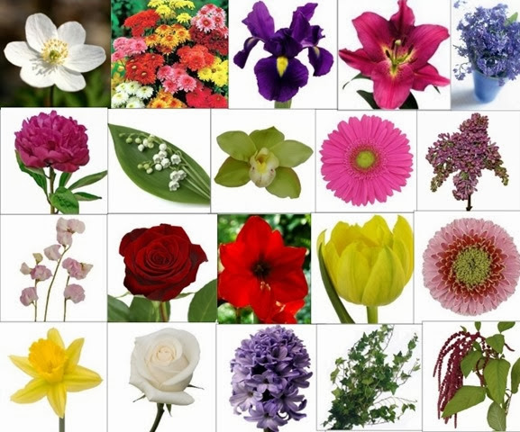 Flowers_meanings