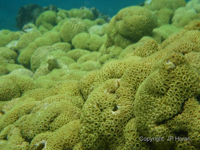Buck Island Reef - IMGP2349.JPG