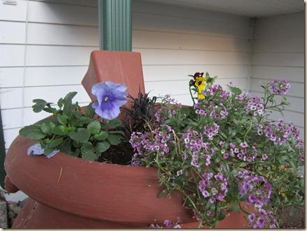 11-15 flowers 3