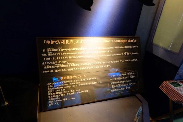 DSCF9255.JPG