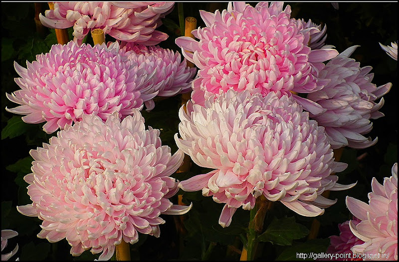 Beautiful Flowers Images (199)