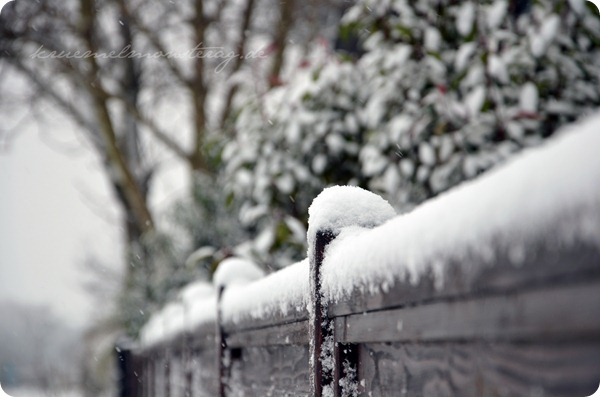 Schneesonntag 20zwölf (4)
