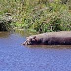 Ngorongoro-Krater, Flusspferd © Foto: Judith Nasse | Outback Africa Erlebnisreisen