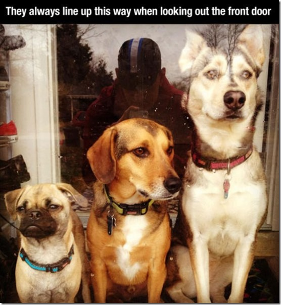 dog-mans-best-friend-14