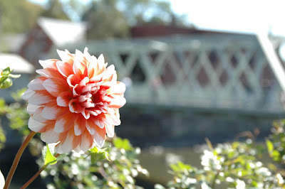 Bridge of Flowersで見た花1