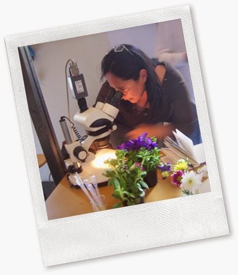 Osservazioni al microscopio