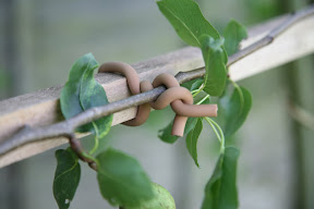 Original Soft-tie Woody Roll - climbing plants