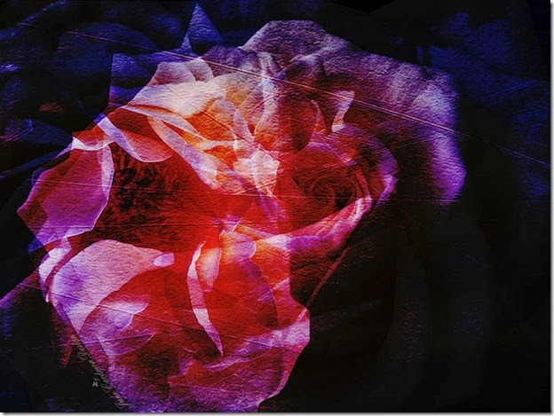 Yellow_Rose_Abstract2
