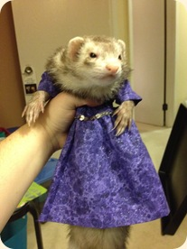 purple ferret dress Molly