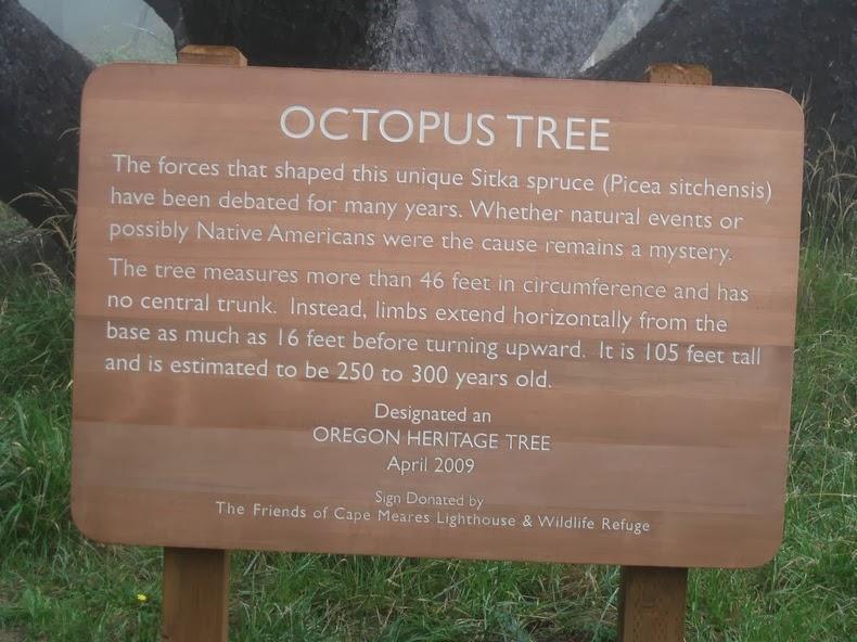octopus-tree-2