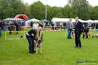 20100513-Bullmastiff-Clubmatch_30905.jpg