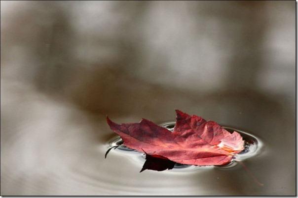 Lindas imagens de folhas do outono (7)