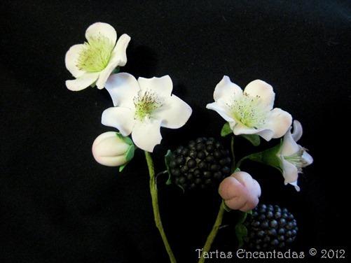 flor de la mora y mora (1)