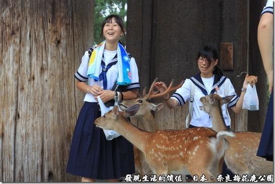奈良梅花鹿公園,這個在拍學生妹吧!