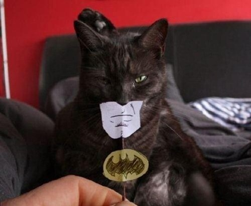 Gatos_caes_Batman09