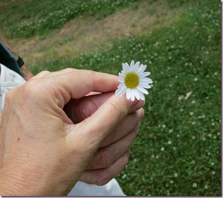 FlowerIMG_3950