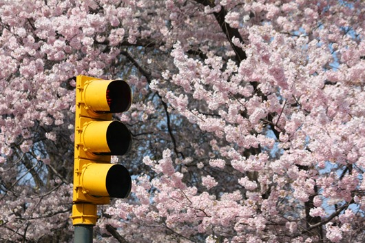 New York spring