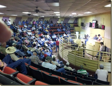 Nacogdoches livestock auction (5)