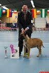 20130511-BMCN-Bullmastiff-Championship-Clubmatch-1842.jpg