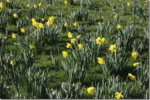 12.03.18 spring walk 005