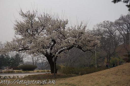 2013Busan2160.JPG