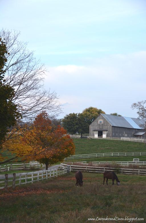 Horsefarm in KY