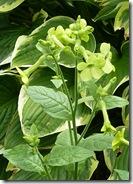 portmore flower