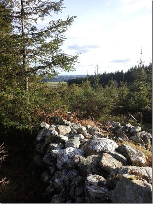 forest walk 8