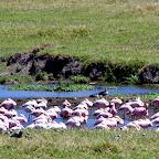 Ngorongoro-Krater, Flamingos © Foto: Judith Nasse | Outback Africa Erlebnisreisen