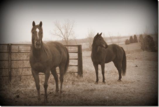 horses 082a