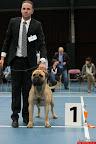 20130510-Bullmastiff-Worldcup-0619.jpg