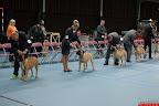 20130511-BMCN-Bullmastiff-Championship-Clubmatch-1824.jpg