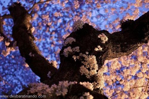 fotos inciriveis lindas em hdr desbaratinando  (31)