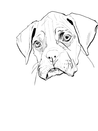Free boxer dog coloring pages