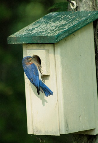 [Bluebird_House%255B3%255D.jpg]