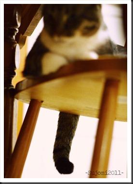 2011 11 12 IMG_6714w