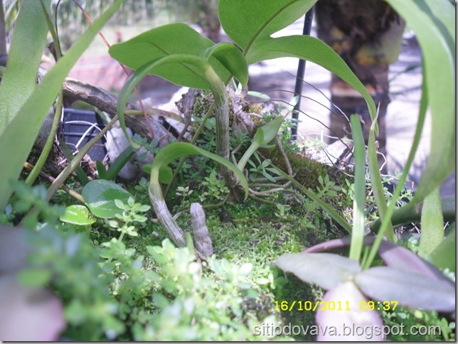 vaso com orquídeas e samambaia