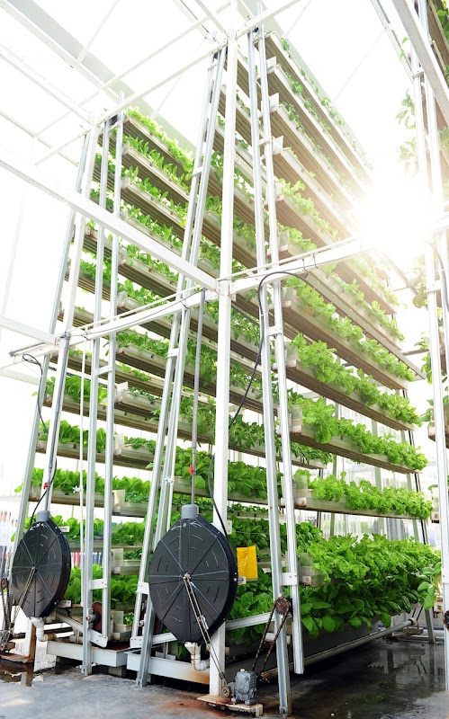 skygreens-vertical-farm-2