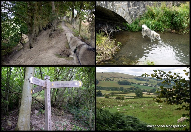 Dyke, swim, signs, sheep
