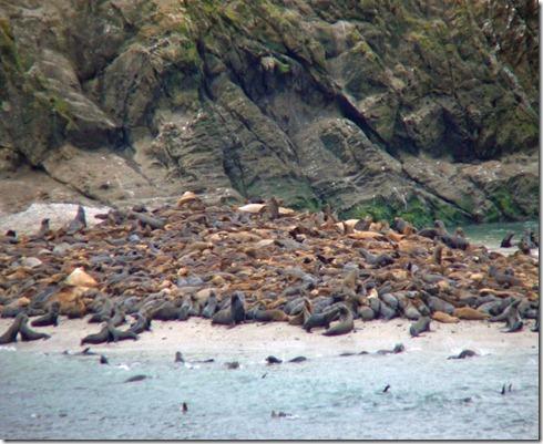 Shell Island Sea Lions