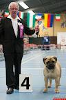 20130511-BMCN-Bullmastiff-Championship-Clubmatch-1700.jpg
