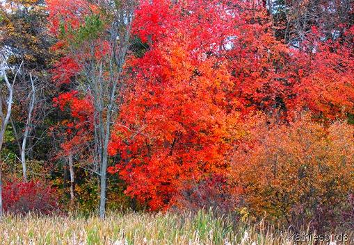 3. fall foliage-kab